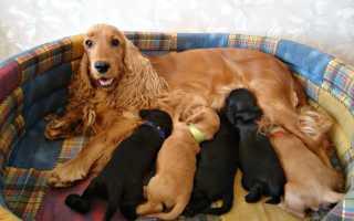 Значение по соннику сновидения, в котором собака родила щенков