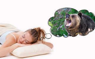 К чему снится бурый медведь женщинам и мужчинам: мнение сонников