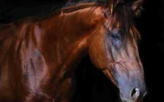 Значение коричневой лошади по различным сонникам для женщин и мужчин