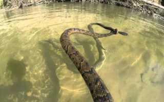 Толкования сонников, к чему снятся змеи в воде
