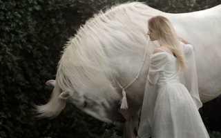 К чему снится белая лошадь: толкование по различным сонникам