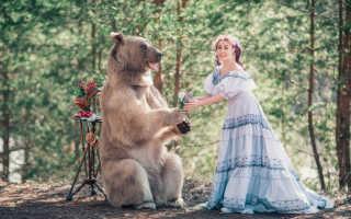 К чему снится медведь женщинам и мужчинам: толкование сонников