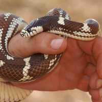 Толкование сонников: держать змею в руках во сне