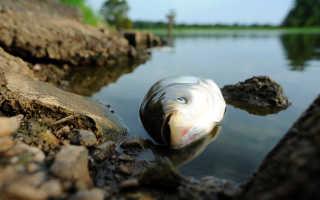 К чему снится мертвая рыба по соннику