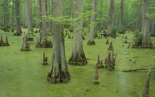 К чему снится болото: что означает по соннику ходить по трясине