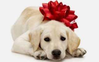 Сонник: к чему подарили собаку или щенка во сне