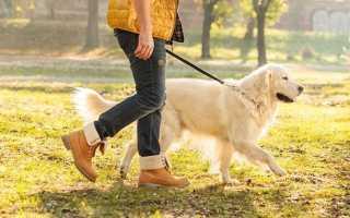 К чему снится гулять с собакой: толкование по соннику