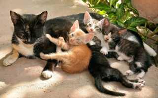К чему снятся кошки и котята женщине и мужчине: толкование сонников