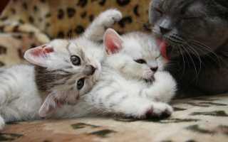 К чему снится рождение котят
