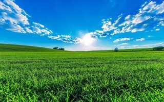 К чему снится поле — трактовка сонников
