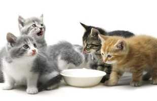 Ситуация, где довелось кормить кошку во сне: значения и расшифровки