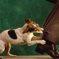 К чему снится злая собака, которая кидается и хочет укусить
