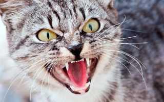Толкование по соннику, если во сне нападает кошка