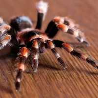 К чему снится паук тарантул: толкования разных сонников