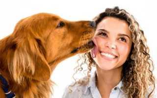 Собака лижет лицо и руки: толкование сна по соннику