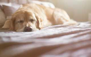 К чему снится бить собаку во сне мужчине или женщине