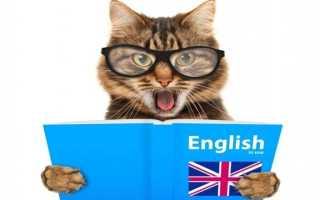 Снится говорящий кот: расшифровка по сонникам