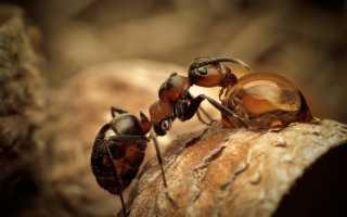 К чему снятся насекомые: толкование для мужчин и женщин