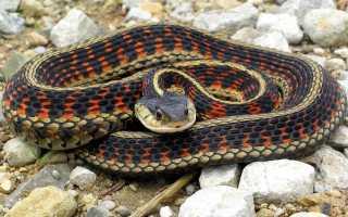 К чему снится ядовитая змея: толкование по различным сонникам
