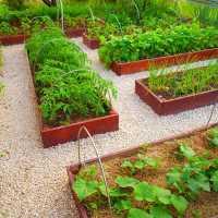 К чему снится огород или дача: толкование по сонникам