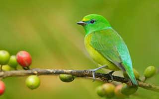 К чему снятся птицы или маленькие птенцы женщине и мужчине