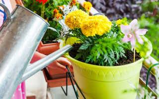 К чему поливать во сне комнатные цветы и садовые растения