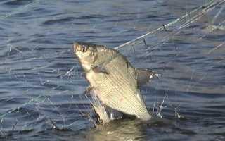 К чему снится ловить рыбу сетью во сне мужчине и женщине