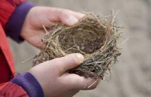 Приснилось гнездо: значение сна по сонникам