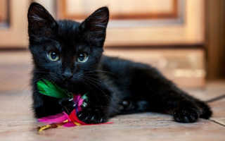 К чему снится черный котенок: сон приснился девушке, женщине, мужчине