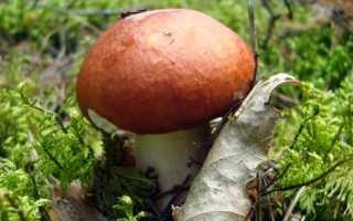 К чему снятся грибы: толкование по сонникам для мужчин и женщин