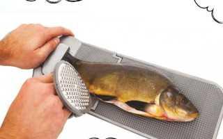 Чистить рыбу во сне: расшифровка сновидения мужчины и женщины
