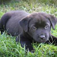 Сны о маленьком черном щенке: толкования по сонникам