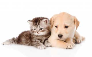 Сонники о котятах и щенках: к чему снятся животные