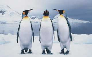 К чему снятся пингвины в воде: толкования из разных сонников