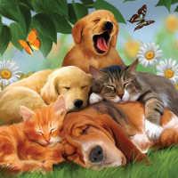 К чему снится много кошек и собак одновременно
