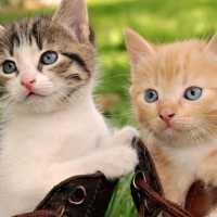 К чему мужчине и женщине снятся маленькие котята