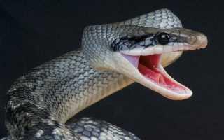 Поймать змею во сне: трактовки популярных сонников