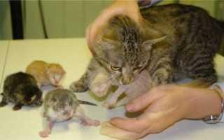 Топить маленьких котят во сне — трактовки от сонников