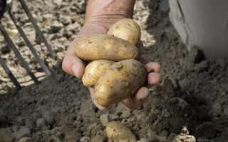 Снится собирать картошку на огороде руками — значение образа в соннике