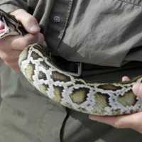 К чему снится убить змею: значение сна для мужчин и женщин