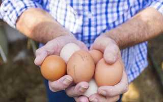 К чему снится собирать яйца: толкование по соннику