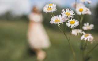 К чему снится белая ромашка — в поле, сухая и в букете