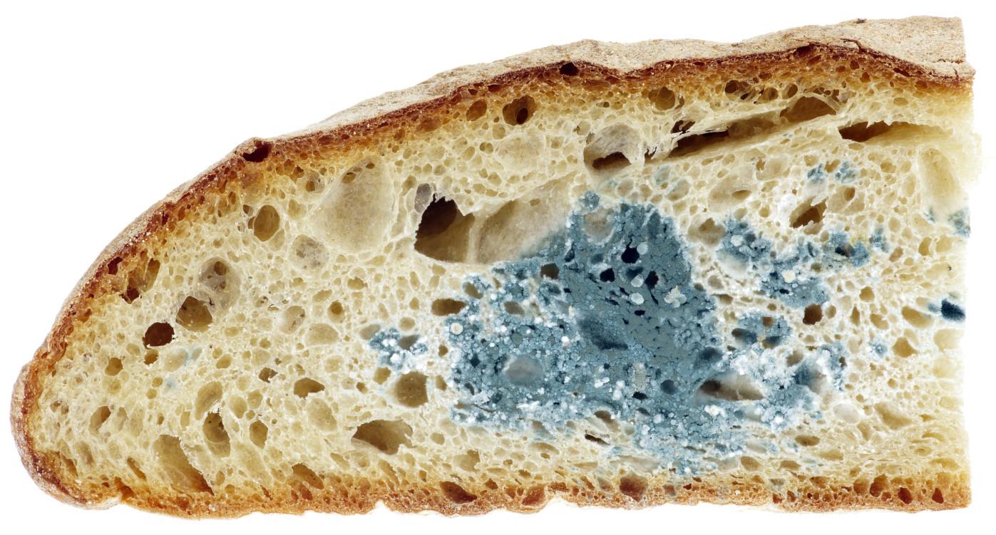 к чему снится плесень на хлебе