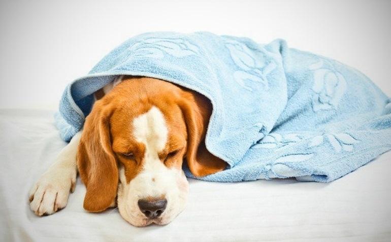 О чем говорит сон про собаку