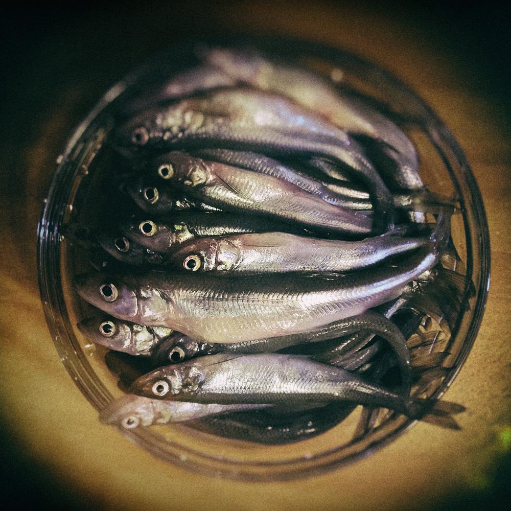 размер дохлой рыбы