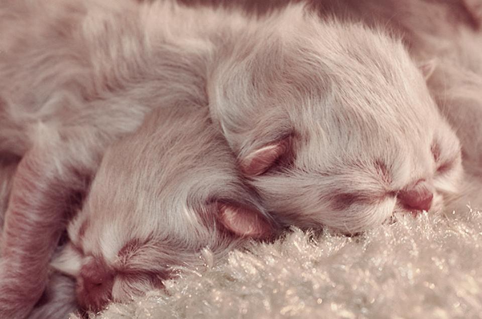 к чему снится рождение котят женщине