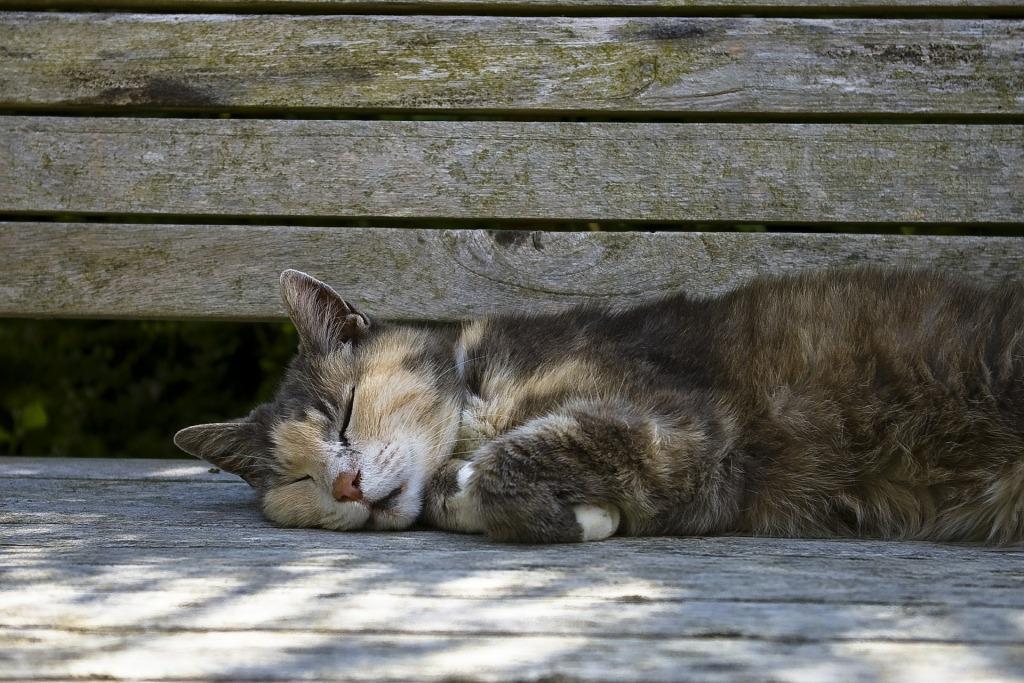 мертвая кошка снится женщине