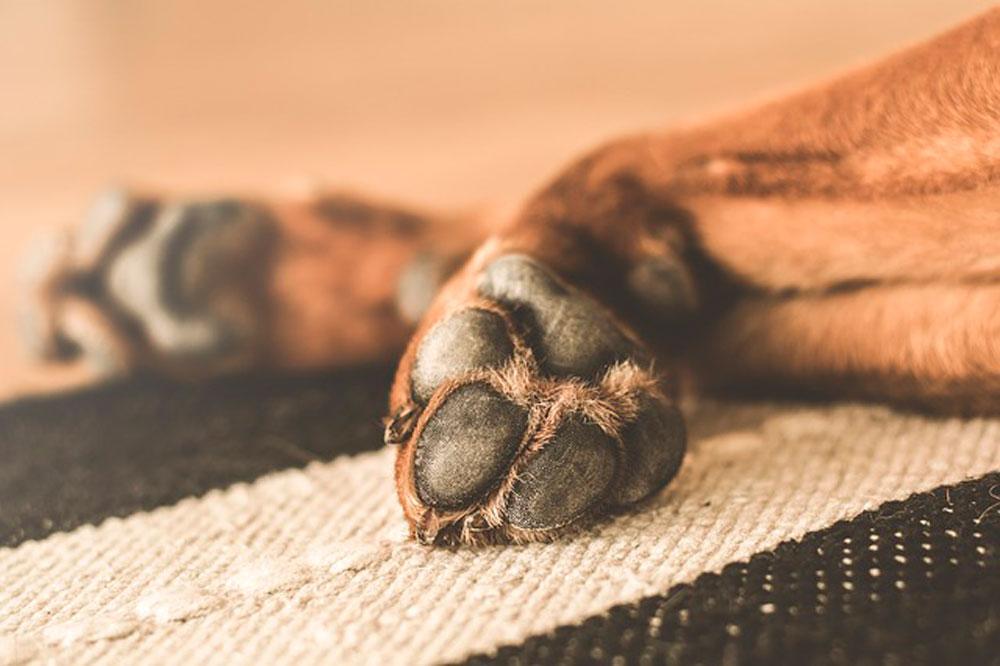 к чему снится мертвая собака