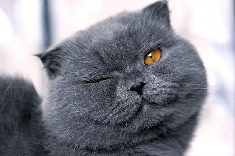 серый кот к чему снится