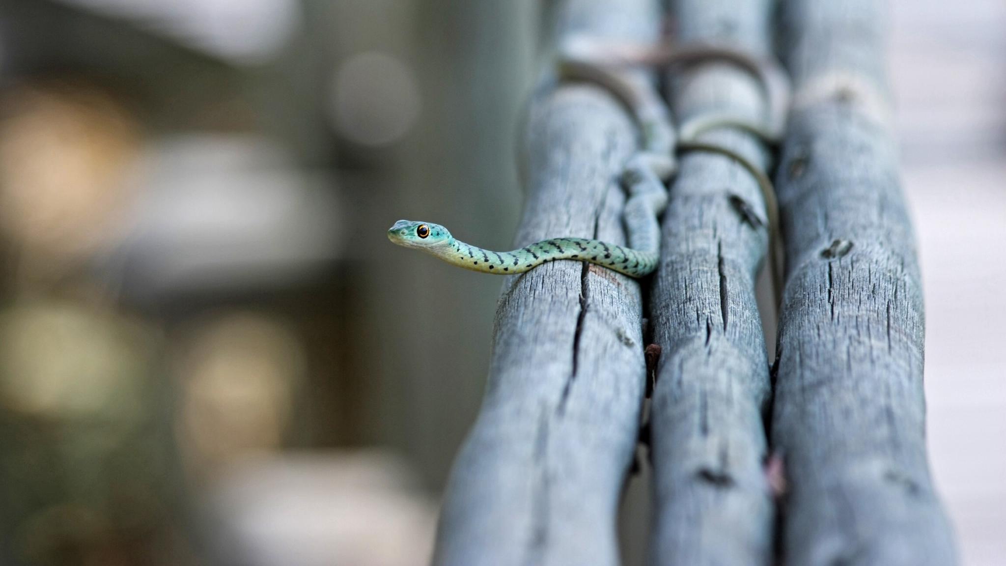 маленькая змея
